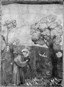 015 La predica agli uccelli MICOZZI